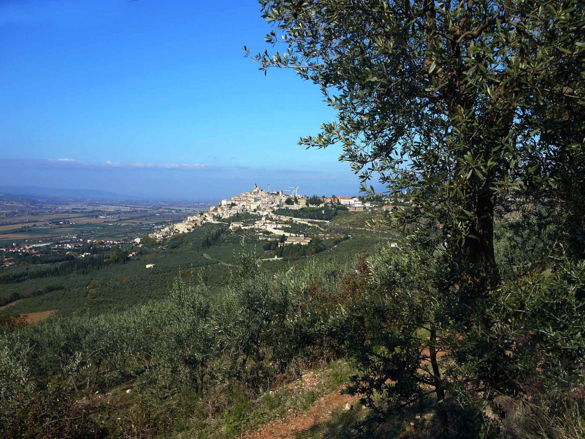 Trevi tra gli ulivi [foto di Giampaolo Filippucci & Tiziana Ravagli]